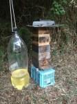 Hornet Trap! Sugar, Vingar and Japanese Saké