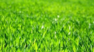 stock-footage-lush-green-grass-blowing-in-the-wind