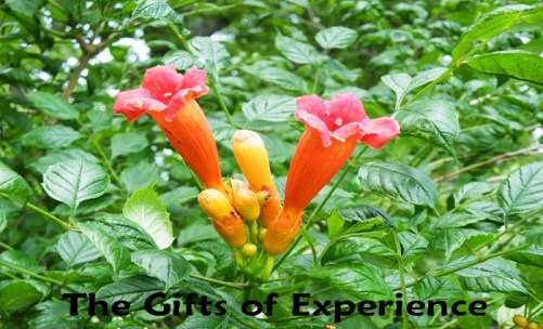 The Gift of Experience