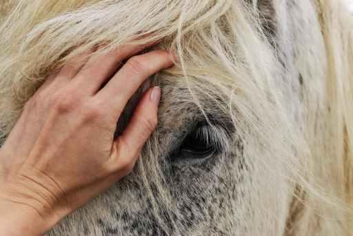 Empath's hand on horse's forehead.