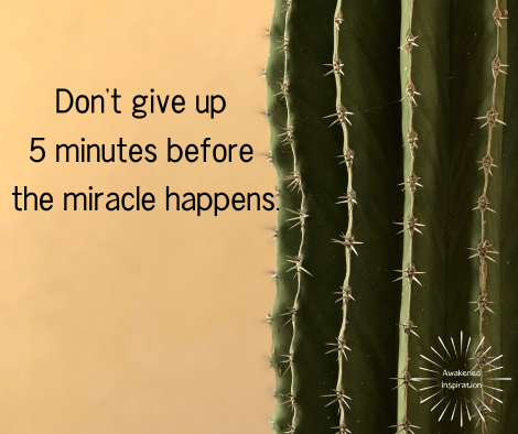 """Cactus with words """"Don't give up 5 minutes before the miracle happens"""". This is a key truth for knowing how to get what you want."""