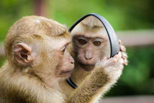 closeup photo of primate looking at itself in a mirror this is the beginning of learning the 3 types of relationsihps