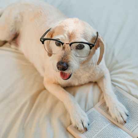 dog in stylish glasses on bed with book