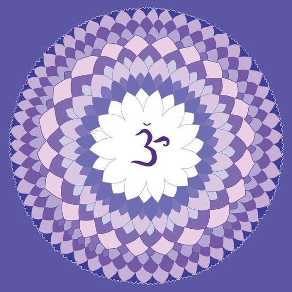 violet-1340083_960_720