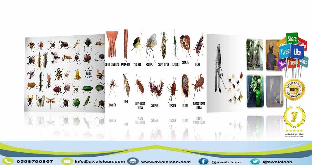 مجموعة كبيرة جدا من الحشرات