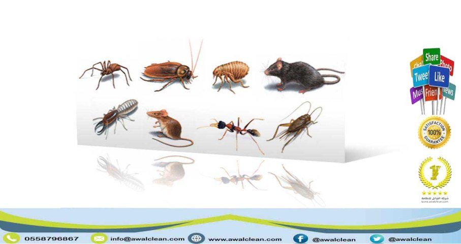 مجموعة من الحشرات