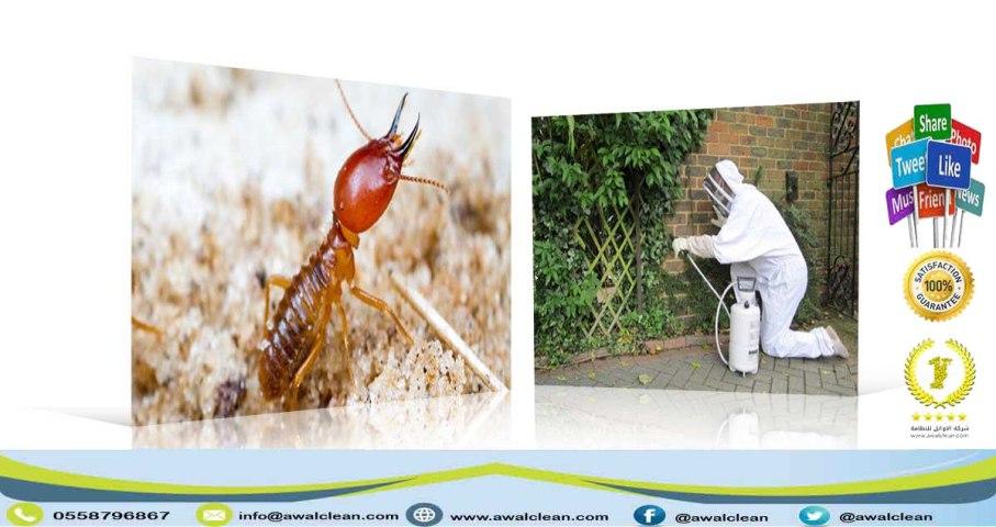 حشرة نمل ابيض و فني رش مبيد