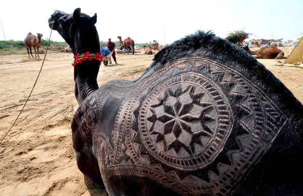 Camel Beautiful Design