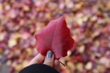 Fall, Philadelphia