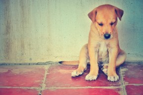 Lonely puppy, Nicaragua, 2011