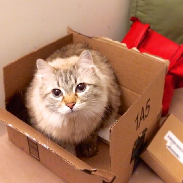 Rowdy. Chillin in a box.