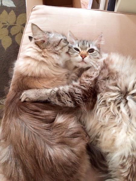 When a cat loves a cat...