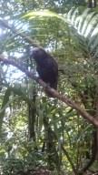 bird on kapiti