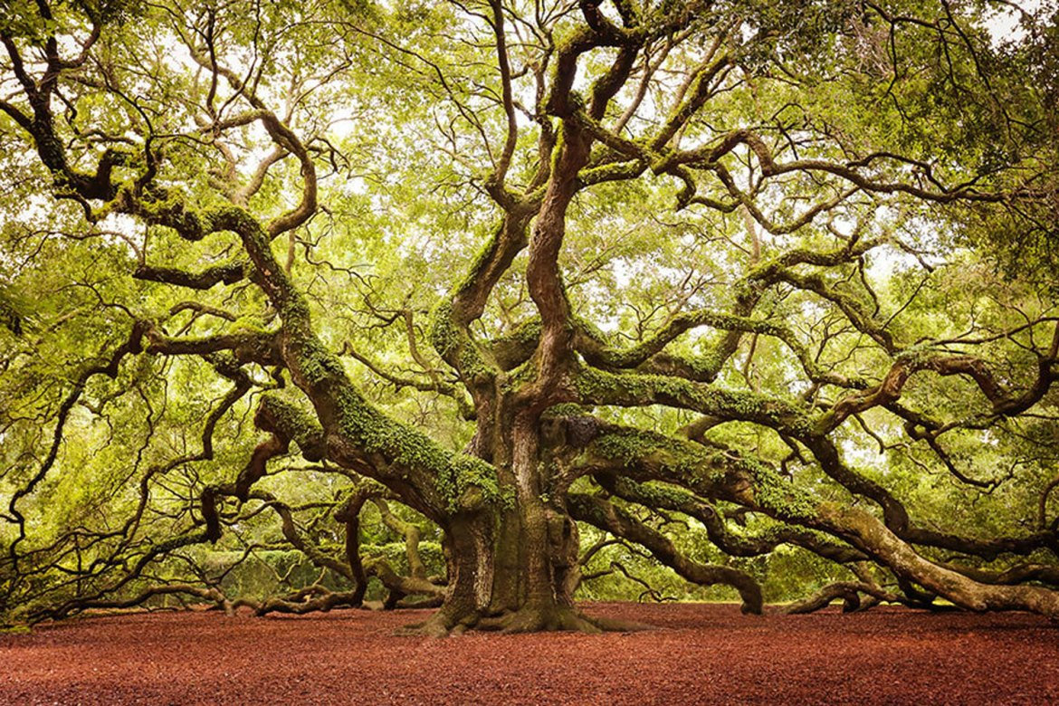 16 Most Glorious Trees Of The World