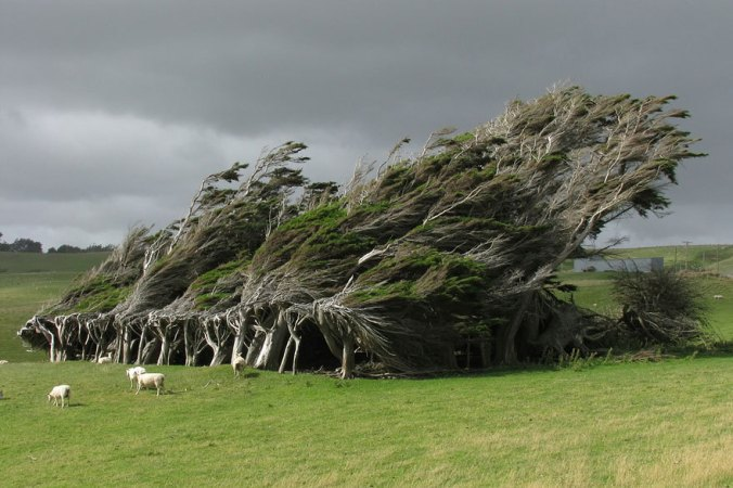 Curved Wind Trees in New Zealand