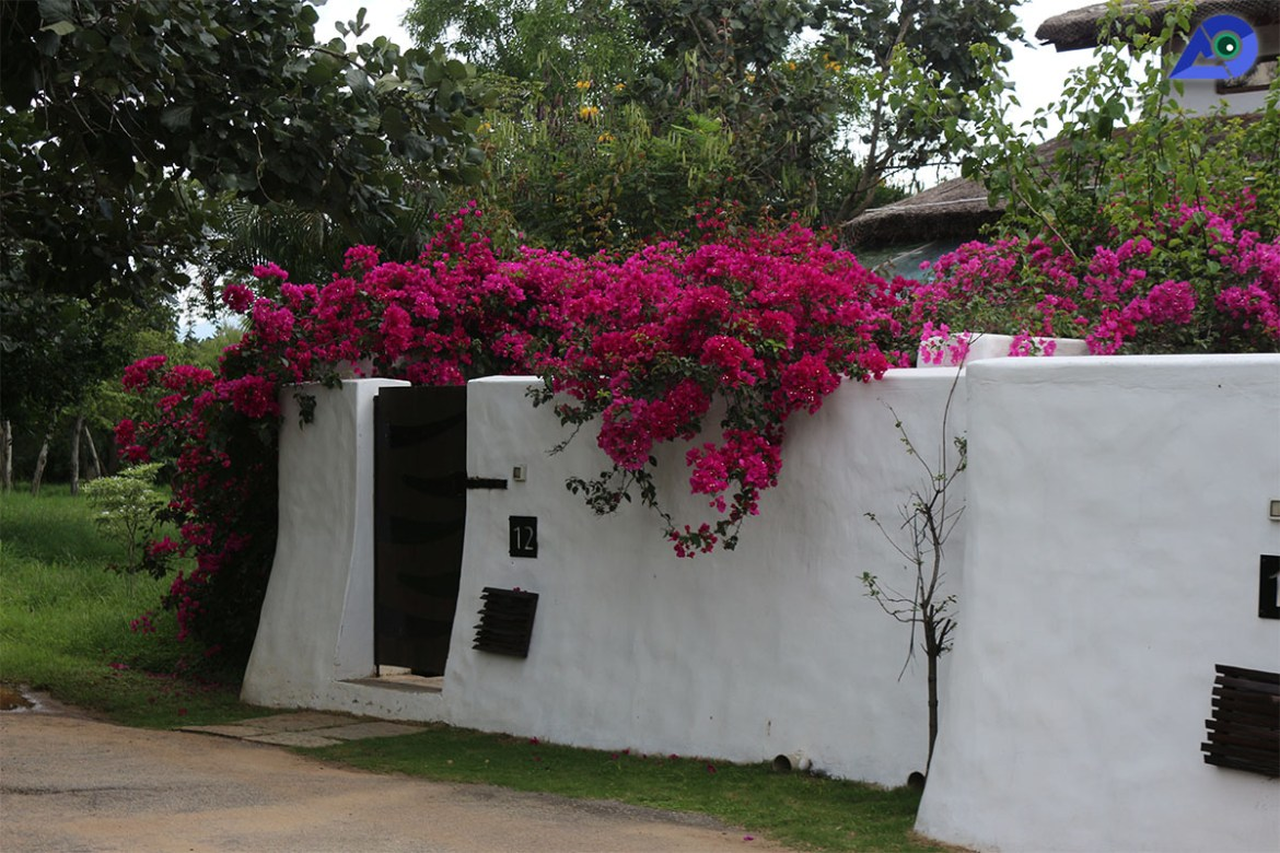 Serai Bandipur Rooms