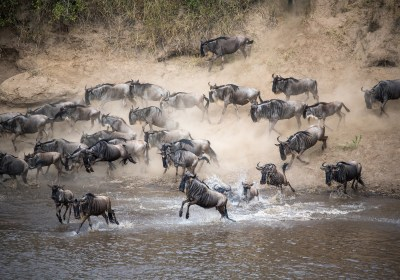 All You Should Know About the Great Wildebeest Migration