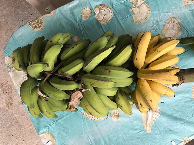 Big-Island-Banana