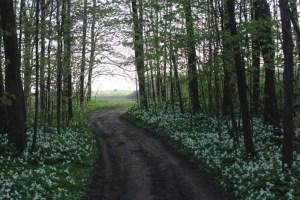 Beeton Woods in undated photo