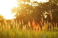 sunset-691682_960_720