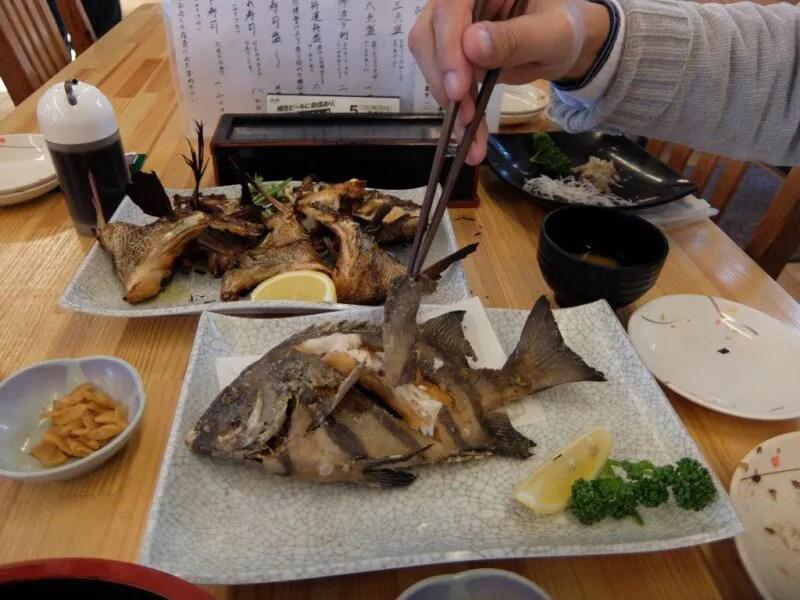 デカい魚たち