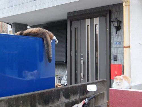 ぶら下がる猫のしっぽ