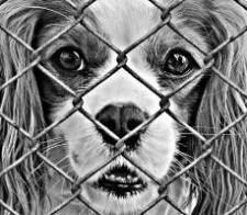 Puppy Mill Awareness Day Petfinder