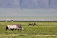 Rhinoeros