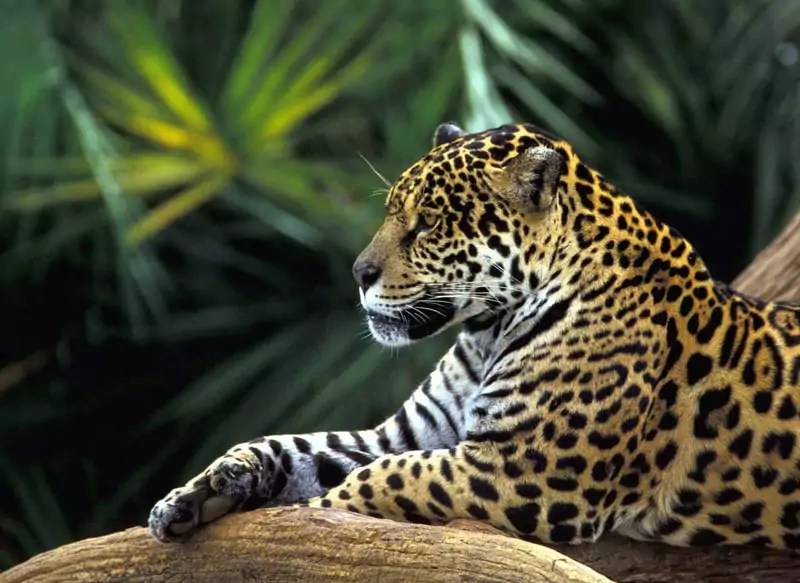 Amazon Basin - 5 Most Awesome Wildlife Destinations in the World