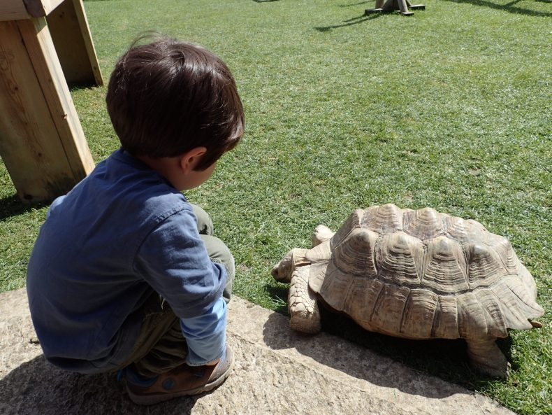 Giant Tortoise at Birdland, Cotswolds Day Out with the Kids