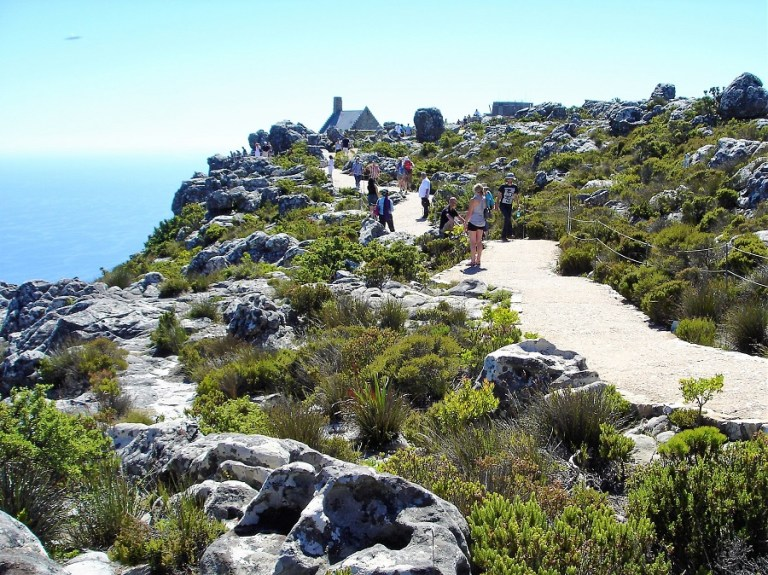 Kapstadt Highlights Tafelberg Wanderwege