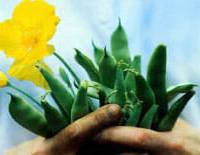 why do you garden?