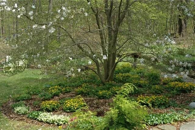 magnolia-bed