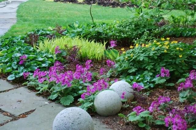 Plants Garden Design