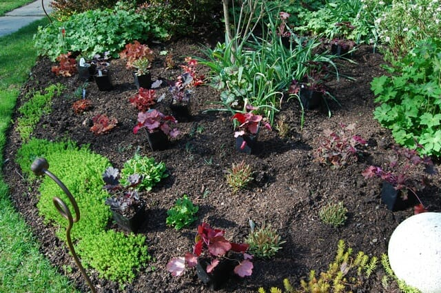 newly planted bed of perennials