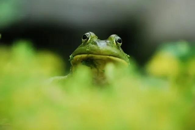 frogboy2