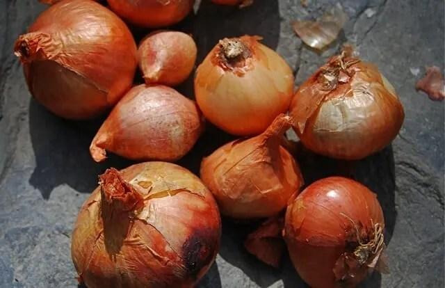 potato-onion