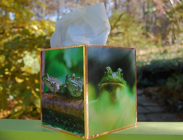 frogboy-tissue-box