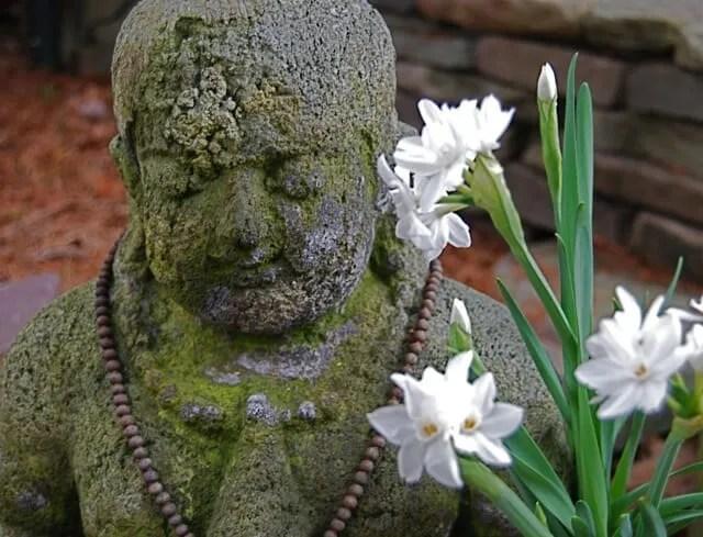 buddha-wpaperwhites
