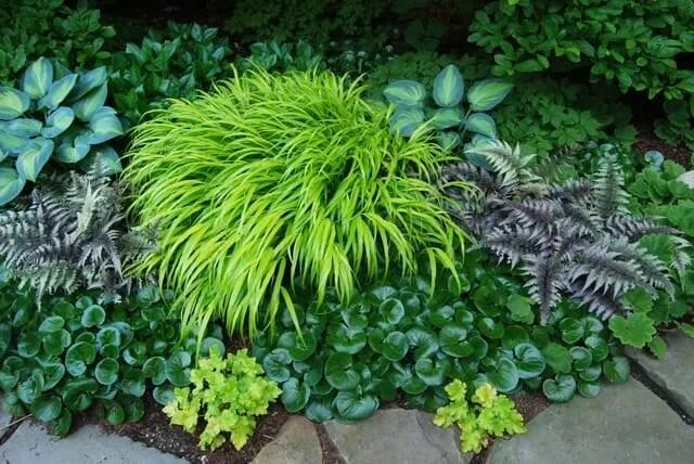 Hosta Mixed 10 Seeds AMAZING MIX Blue,Green,Variegated,Wavy,Shiny,Smooth