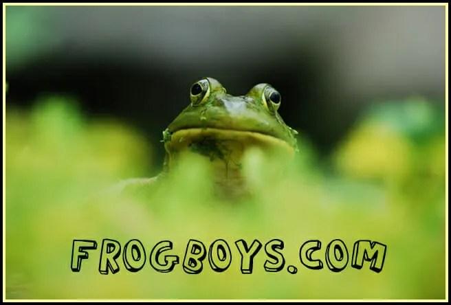 frogboyheader