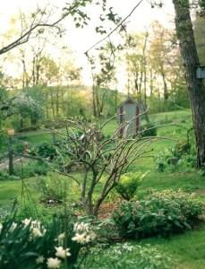 peegee-pruning