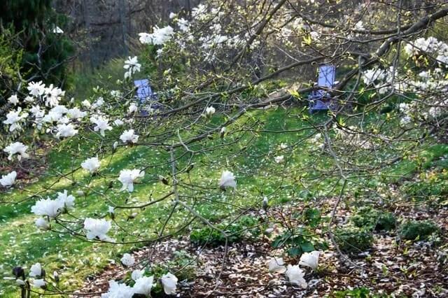 magnolia-shattering