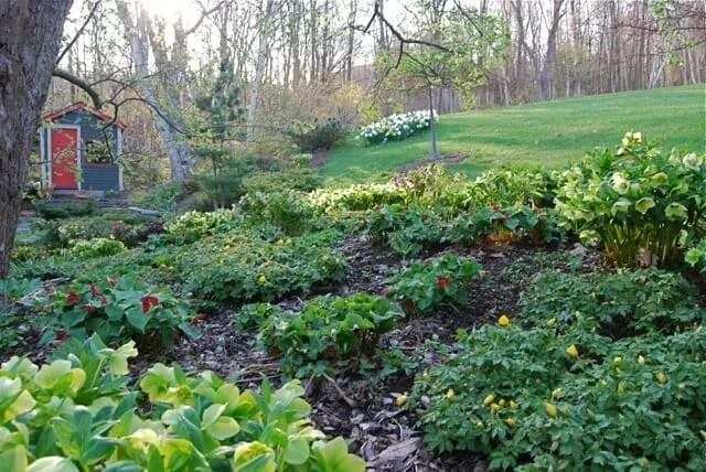 mature-underplanting