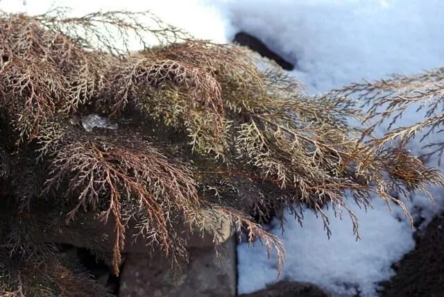 microbiota-winter-color
