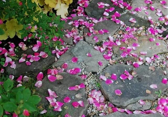 fallen-rose-petals