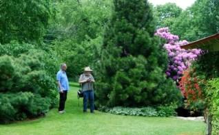 umbrella-pine-with-visitors.jpg