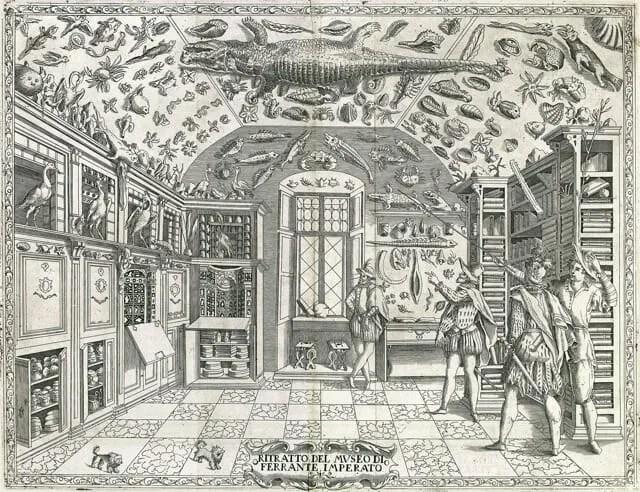 cabinet-of-curiosities-2
