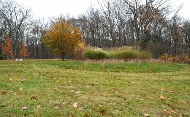 field above backyard, november