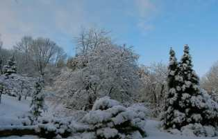 back-yard-in-snowfall